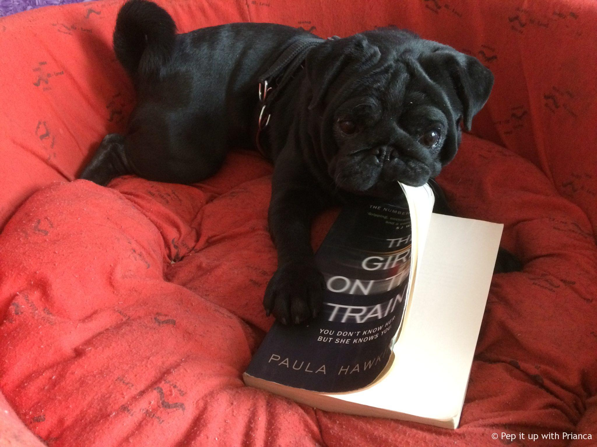 672 - Life's a Pooch - A Day in the Life of a 'Black' Pug!